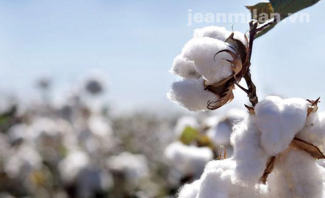 Mẹo phân biệt sợi Cotton và sợi Poli