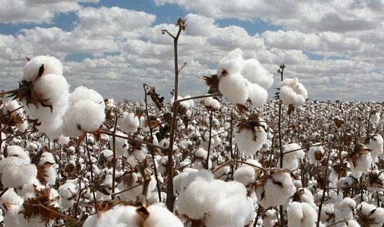 10 yếu tố ảnh hưởng tới giá vải jean